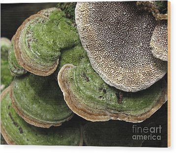 Greening Velvet Brackets Wood Print