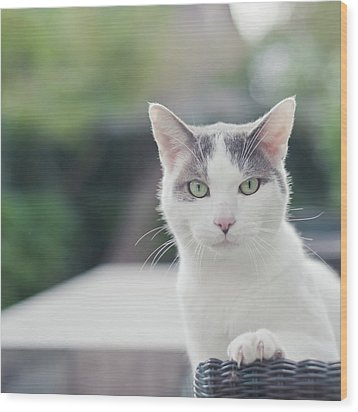 Grey And White Cat Wood Print by Cindy Prins