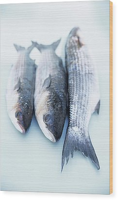 Grey Mullet Wood Print by Veronique Leplat