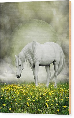 Wood Print featuring the photograph Grey Pony In Field Of Buttercups by Ethiriel  Photography
