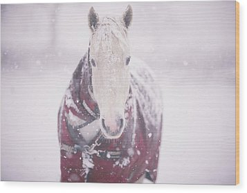 Grey Pony In Red Rug Wood Print by Sasha Bell