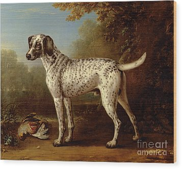 Grey Spotted Hound Wood Print by John Wootton