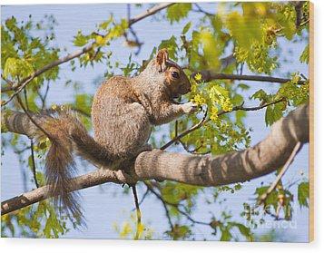 Grey Squirrel Feedingtime Wood Print by Christine Amstutz