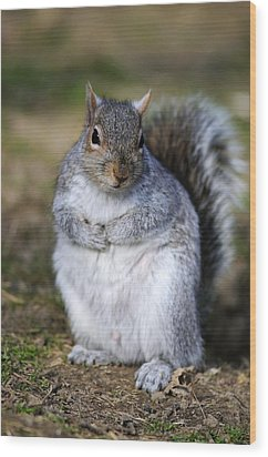 Grey Squirrel Sitting On The Ground Wood Print by Colin Varndell