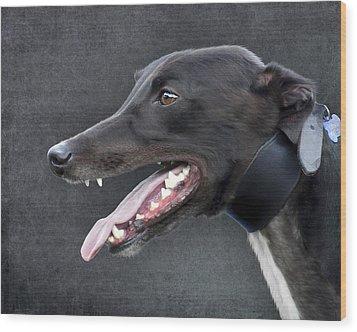 Greyhound Dog Portrait Wood Print by Ethiriel  Photography