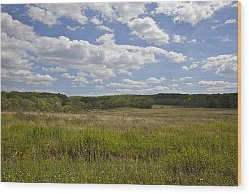 Griggstown Native Grassland Preserve Wood Print by David Letts