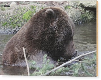 Grizzley - 0006 Wood Print by S and S Photo
