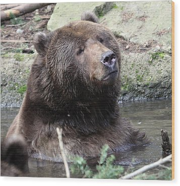 Grizzley - 0009 Wood Print by S and S Photo