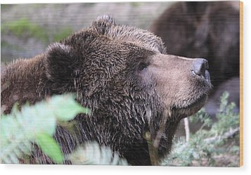 Grizzley - 0010 Wood Print by S and S Photo