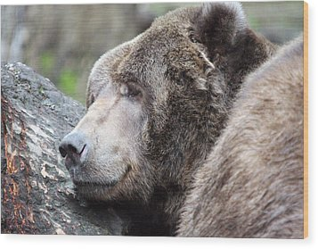 Grizzley - 0014 Wood Print by S and S Photo