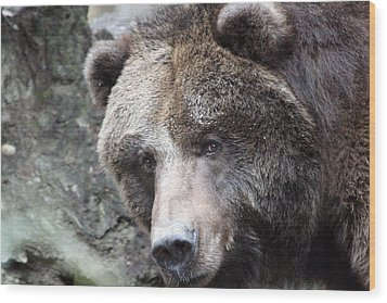 Wood Print featuring the photograph Grizzley - 0015 by S and S Photo