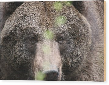 Wood Print featuring the photograph Grizzley - 0017 by S and S Photo