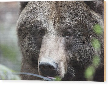 Wood Print featuring the photograph Grizzley - 0018 by S and S Photo