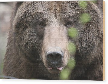 Wood Print featuring the photograph Grizzley - 0020 by S and S Photo