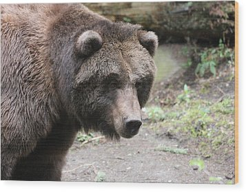 Wood Print featuring the photograph Grizzley - 0021 by S and S Photo