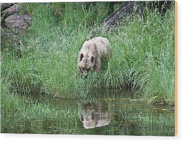 Grizzly Bear And Reflection On Prince Rupert Island Canada 2209 Wood Print by Michael Bessler