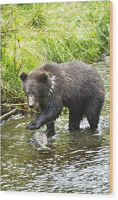 Grizzly Cub Catching Fish In Fish Creek Wood Print by Richard Wear