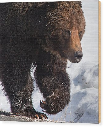 Wood Print featuring the photograph Grizzly On Snow by J L Woody Wooden