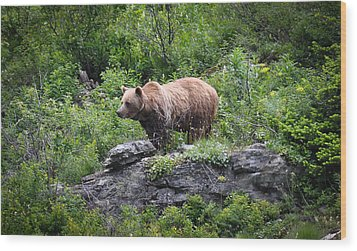 Wood Print featuring the photograph Grizzly by Ronda Broatch