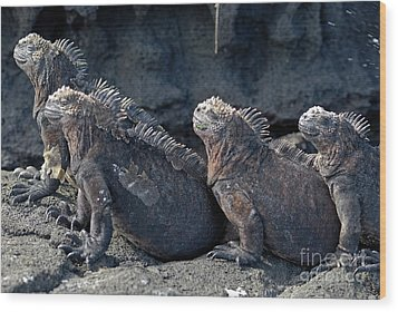 Group Of Marine Iguana Lying On Rock Wood Print by Sami Sarkis