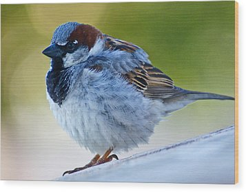 Guard Bird Wood Print by Colleen Coccia