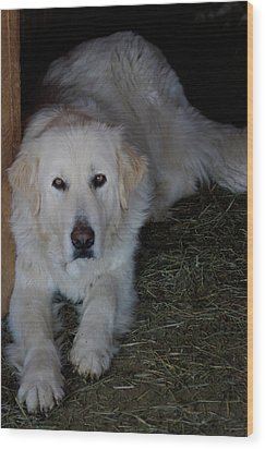 Guarding The Barn Wood Print by Charles and Melisa Morrison