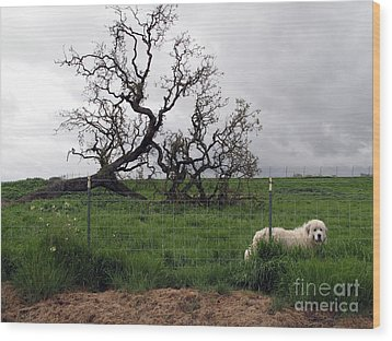 Wood Print featuring the photograph Guarding The Sheep by Leslie Hunziker