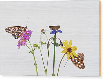 Gulf Fritillary And Brown Skipper Wood Print by Jim McKinley