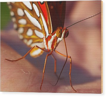 Gulf Fritillary Wood Print by Billy  Griffis Jr