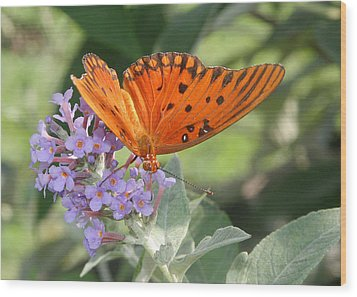 Wood Print featuring the photograph Gulf Fritillary On Butterfy Bush by Paula Tohline Calhoun