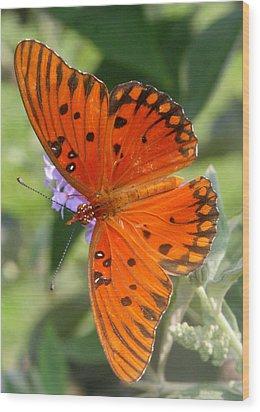 Wood Print featuring the photograph Gulf Fritillary by Paula Tohline Calhoun