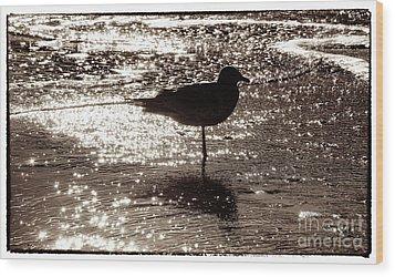 Gull In Silver Tidal Pool Wood Print by Jim Moore