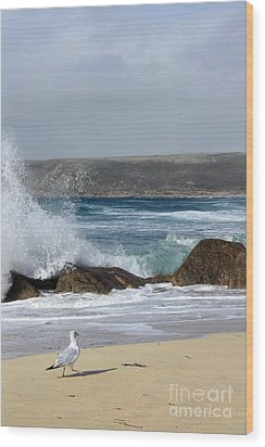 Gull On The Sand Wood Print by Linsey Williams