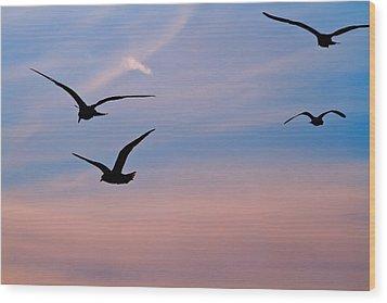 Gulls At Dusk Wood Print by Karol Livote