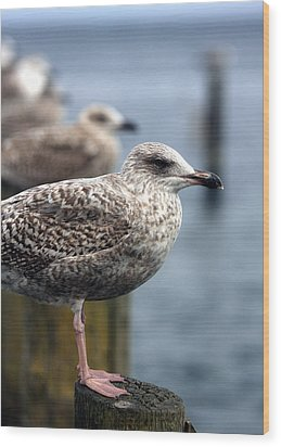 Gulls Wood Print by Falko Follert