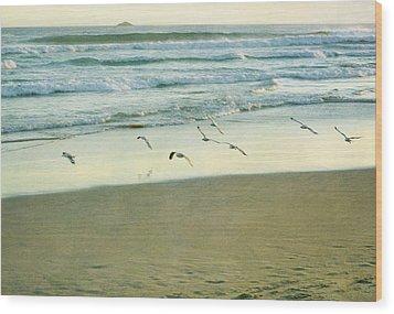 Gulls Flying Wood Print by Jill Ferry