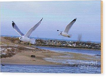 Gulls In Flight 2 Wood Print