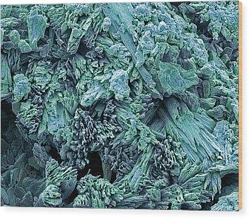 Gypsum Crystals, Sem Wood Print by Steve Gschmeissner