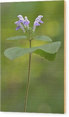 Wood Print featuring the photograph Hairy Skullcap II by JD Grimes