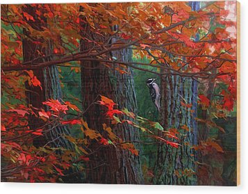 Hairy Woodpecker Wood Print by Ron Jones