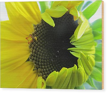 Wood Print featuring the photograph Half-bloom Beauty by Tina M Wenger