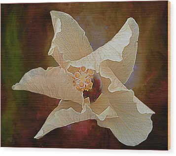 Hibiscus Floats In Space Wood Print by Barbara Middleton