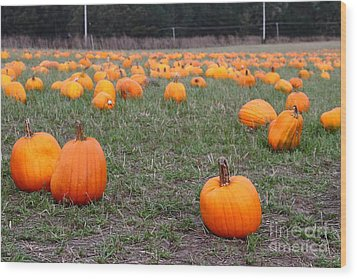 Halloween Pumpkin Patch 7d8383 Wood Print by Wingsdomain Art and Photography