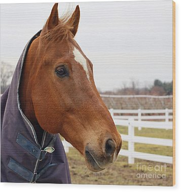 Wood Print featuring the photograph Handsome Horse by Denise Pohl