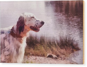 Handsome Hunter. English Setter Wood Print by Jenny Rainbow