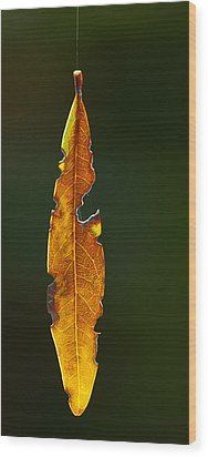 Hanging By A Thread Wood Print by Don Durfee