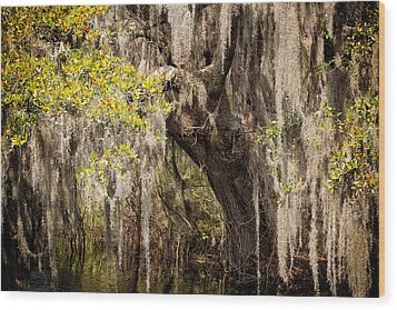 Hanging Moss Wood Print by Denis Lemay