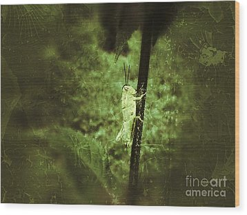 Hanging On Wood Print by Christy Bruna