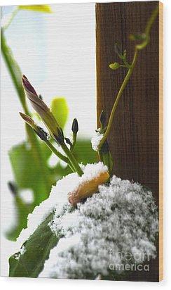 Hanging On Wood Print by Elaine Mikkelstrup