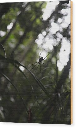 Hanging Spider Wood Print